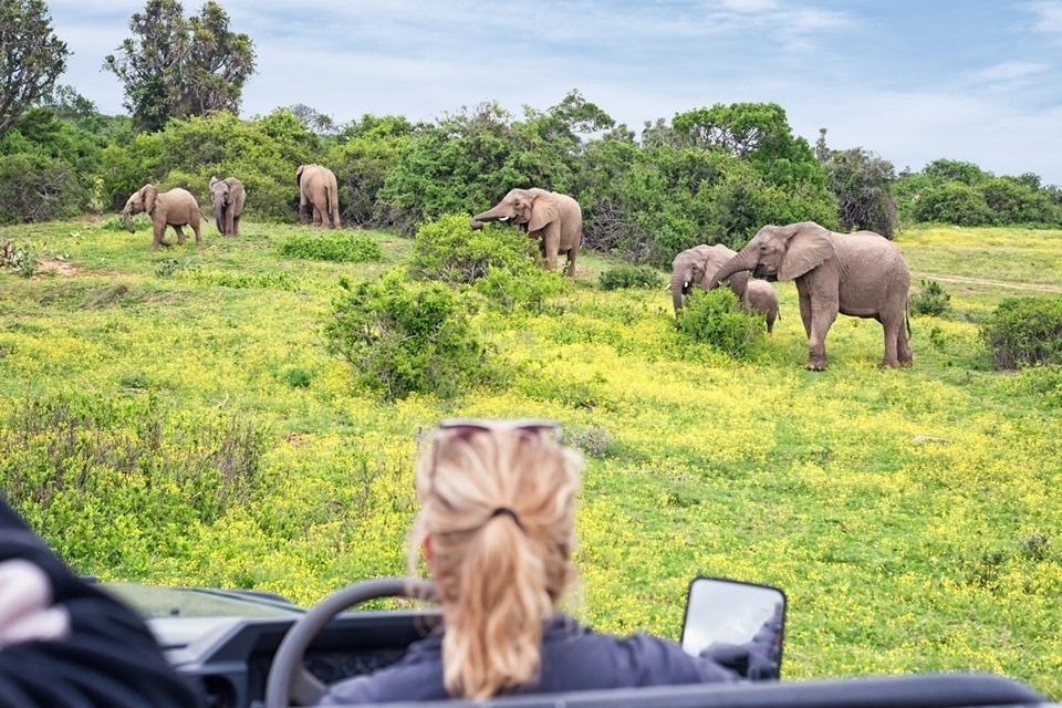 10 dages Big Five-safari i Sydafrika inkl. fly & hotel med halvpension